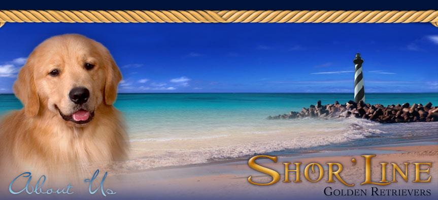 Shor'Line Golden Retrievers :: Golden Retriever Breeder - Illinois